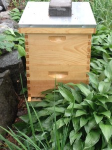Beehive_Pic